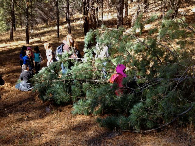 Ash Creek students on a tree-cutting expedition in the Chiricahua Mountains